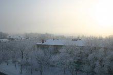 Зима библиотеки 2011