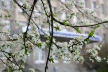 Ясный взгляд весны