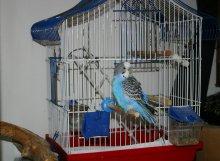 Попугай Ральф у входа в своё жилище