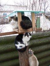 Кастинг котов